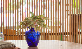 Голубая ваза на таблице Стоковое фото RF