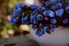 голубая ваза цветков Стоковая Фотография RF