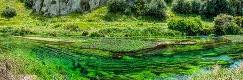Голубая весна которая устроена на дорожке Te Waihou, Гамильтон Новая Зеландия Стоковые Изображения