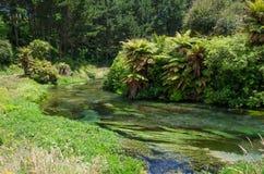 Голубая весна которая устроена на дорожке Te Waihou, Гамильтон Новая Зеландия стоковое изображение rf