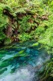 Голубая весна которая устроена на дорожке Te Waihou, Гамильтон Новая Зеландия стоковые фотографии rf