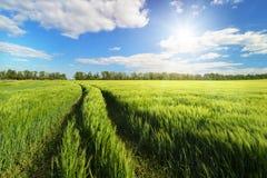 голубая весна неба зеленого цвета травы поля Стоковые Изображения RF