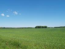 голубая весна неба зеленого цвета травы поля Стоковые Изображения