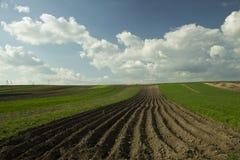 голубая весна неба зеленого цвета травы поля Стоковые Фото
