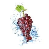 Голубая виноградина при выплеск воды изолированный на белизне Стоковое Фото