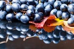 голубая виноградина Стоковая Фотография RF