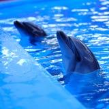 голубая вода дельфина Стоковые Фото