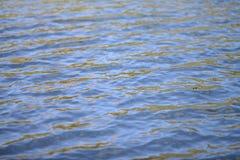 голубая вода Стоковое Изображение