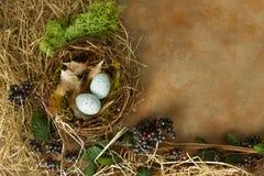 Голубая граница яичек весной Стоковая Фотография RF