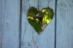 Голубая деревянная дверь в autum с виноградинами Стоковое Изображение