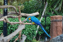 голубая икона Стоковая Фотография