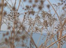 Голубая и коричневая флористическая предпосылка Стоковые Изображения RF