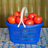 Голубая корзина с зрелыми томатами Стоковое фото RF