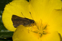 Голубая муха бабочки в природе утра Стоковое фото RF