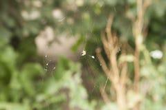 голубая мягкая сеть подкраской спайдера Стоковое Фото