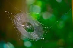 голубая мягкая сеть подкраской спайдера стоковые фотографии rf