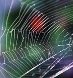 голубая мягкая сеть подкраской спайдера Стоковые Изображения RF