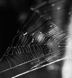 голубая мягкая сеть подкраской спайдера Стоковая Фотография