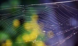 голубая мягкая сеть подкраской спайдера Стоковые Фото