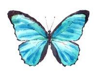Голубая нарисованная рука акварели бабочки Morpho Стоковые Изображения