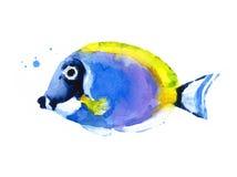 Голубая нарисованная рука иллюстрации акварели рыб кораллового рифа Стоковая Фотография