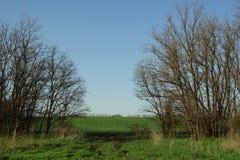 голубая пасмурная весна неба утра зеленого цвета травы поля Стоковые Изображения RF