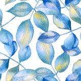Голубая предпосылка листьев роз Стоковая Фотография RF
