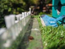 Голубая птица на зеленой траве Стоковая Фотография