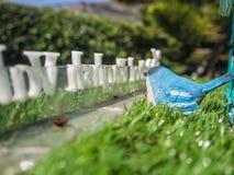 Голубая птица на зеленой траве Стоковое фото RF