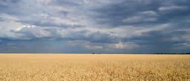 голубая пшеница неба поля Стоковые Фото