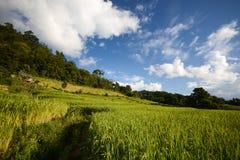 голубая терраса неба риса Стоковые Изображения RF