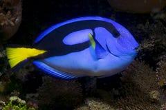 голубая тянь Стоковая Фотография