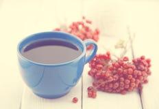 Голубая чашка терапевтического травяного чая с ягодой рябины на белом деревенском деревянном столе альтернативный bamboo поднос с Стоковые Изображения