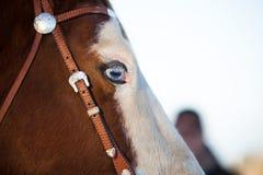 голубая eyed лошадь Стоковое фото RF