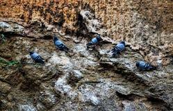 5 голубей на утесе Стоковое Изображение