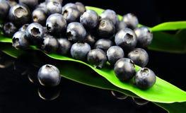 Голубика на зеленых лист Стоковые Фотографии RF
