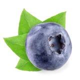 Голубика с листьями на белизне Стоковое Изображение