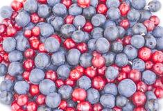 Голубики и клюква cowberries Стоковые Изображения