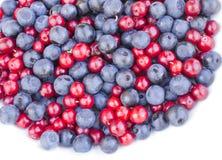 Голубики и клюква cowberries Стоковые Изображения RF