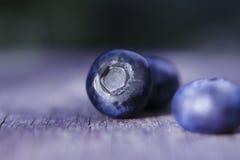Голубики Стоковая Фотография