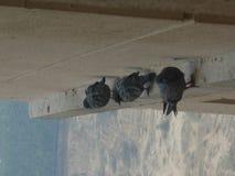 Голуби в группе стоковое фото
