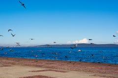 Голуби в Петрозаводске Стоковое Изображение