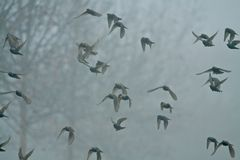 Голуби в тумане Стоковые Фото