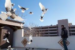Голуби летая вне их курятников Реактор-размножителы голубя наблюдают их Стоковые Изображения RF