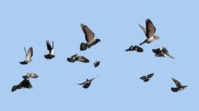 Голуби летая к солнцу стоковое фото