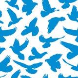 Голуби делают по образцу безшовное Стоковая Фотография RF
