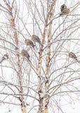 Голуби зимы стоковые изображения