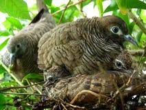 Голуби и младенцы Стоковые Фото