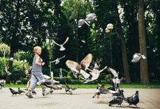 Голуби мальчика подавая птицы в парке Стоковая Фотография