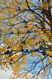 Голуби на дереве Стоковые Фото